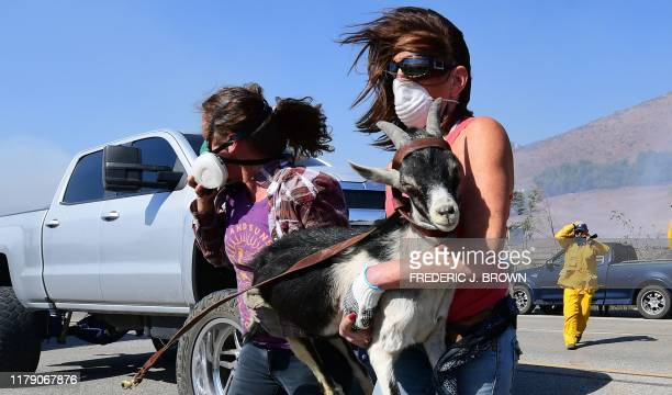 Laura Horvitz and Robyn Phipps help rescue goats from a ranch near the Reagan Presidential Library in Simi Valley during the Easy Fire in Simi Valley...