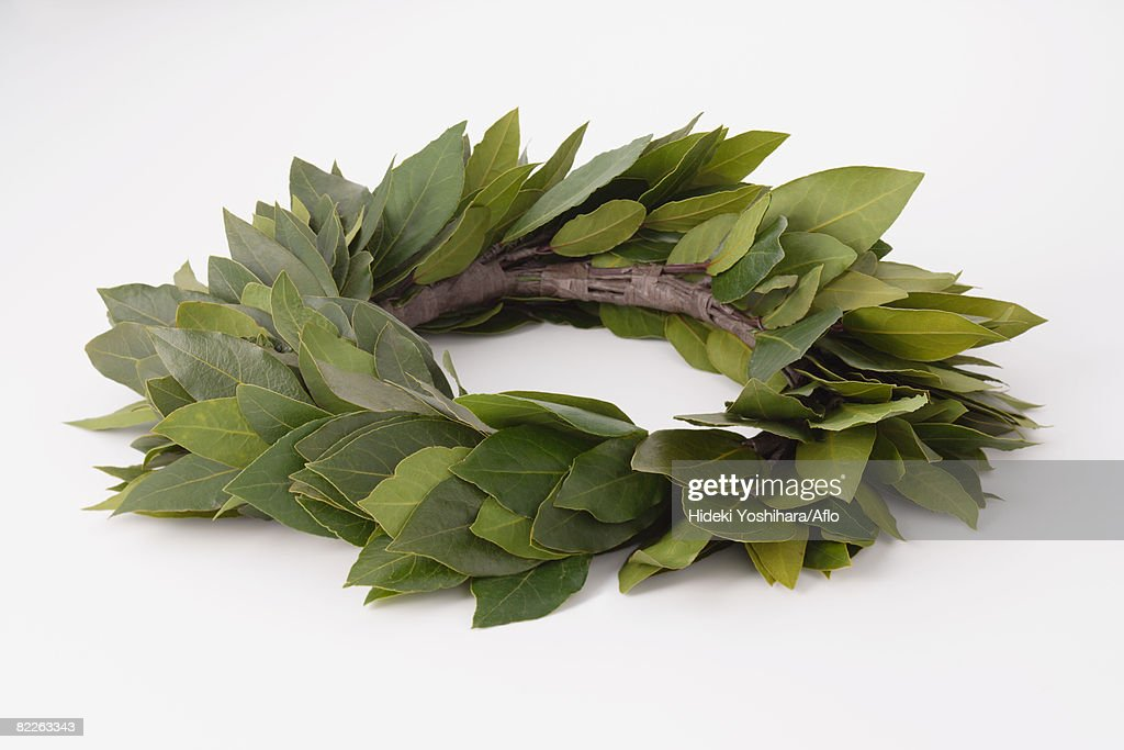 Laurel : Stock Photo