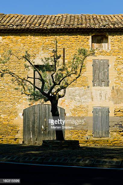 laurel tree outside warehouse - bedarrides photos et images de collection