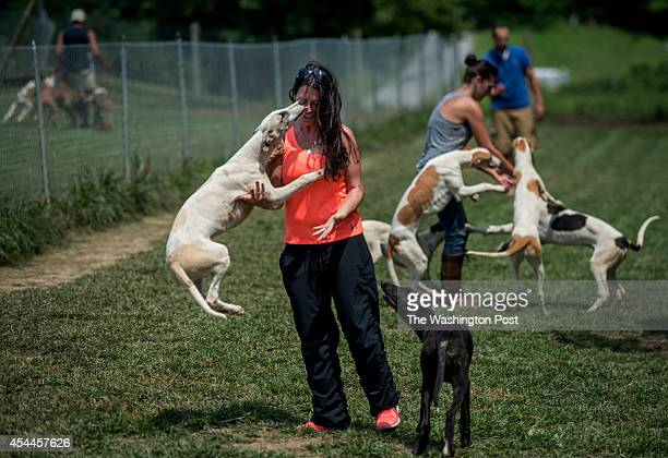 Lauren Monroe gets a kiss from a greyhound puppy at greyhound breeding and training grounds operated by her fiancee Rod Monroe on August 9 in...