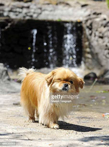 Lauren Teresa Giddings' dog Butterbean joined family and supporters at Washington Park for a picnic Monday after Stephen McDaniel plead guilty in...