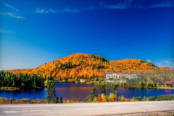 laurentian forest in autumn (fall), quebec, canada - québec stock-fotos und bilder