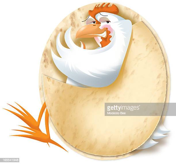 Laurie McAdam color illustration of a happy chicken nestled snuggly in a tortilla
