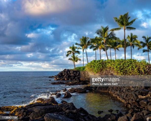 a lava covered seashore and palm trees on a tropical island. - kailua stock pictures, royalty-free photos & images