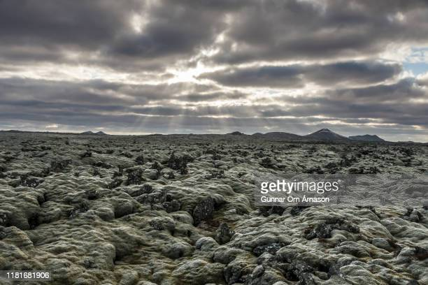 lava field of the reykjanes peninsula, - gunnar örn árnason stock pictures, royalty-free photos & images