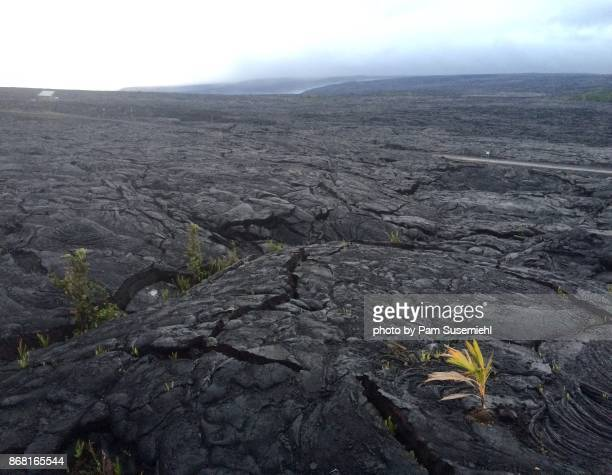 lava field - lava plain stock pictures, royalty-free photos & images