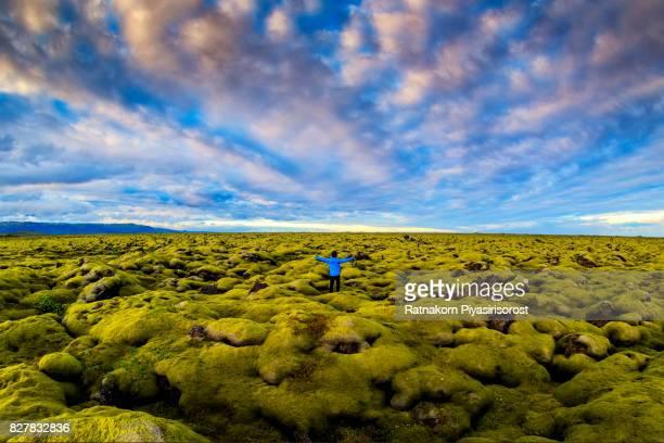 Lava moss field in Iceland