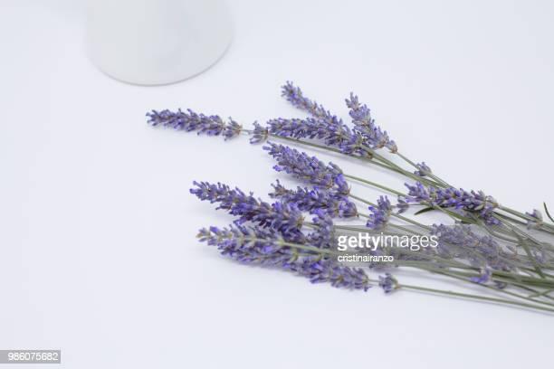 Lavande bouquet