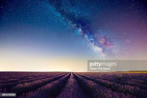 lavander field - milky way stock pictures, royalty-free photos & images