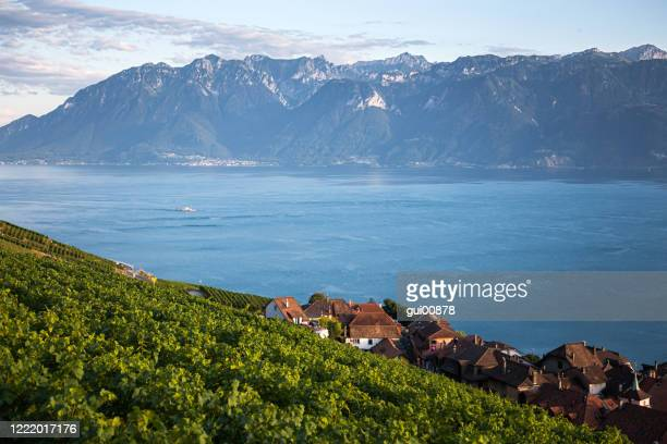 lavaux region, vaud - vaud canton stock pictures, royalty-free photos & images
