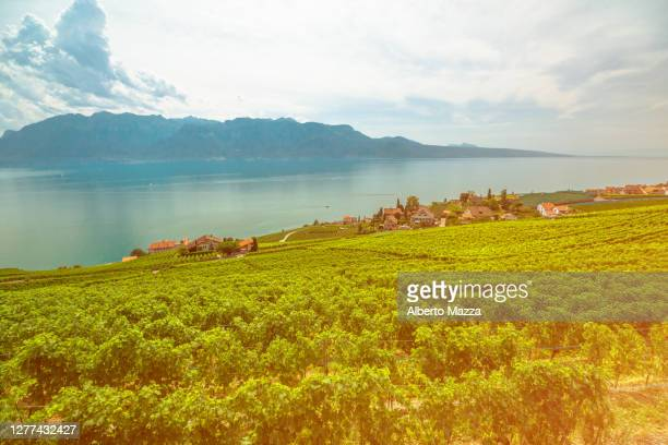 lavaux vineyard terraces - ヴォー州 ストックフォトと画像