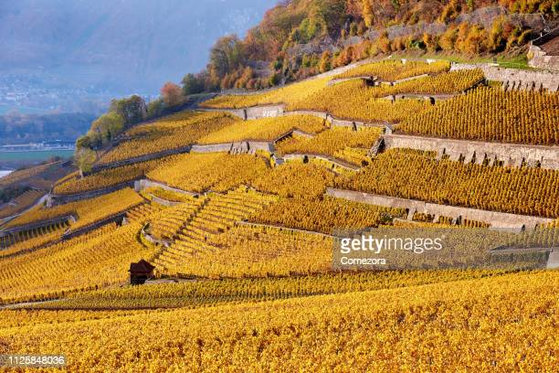 lavaux vineyards at sunset, switzerland - lausanne stock pictures, royalty-free photos & images