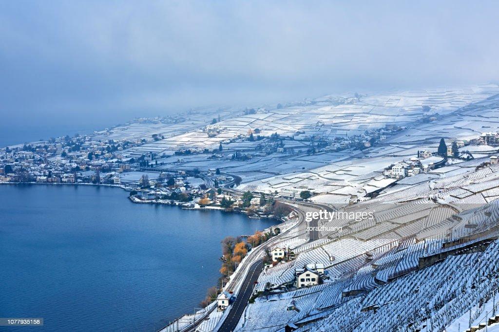 Lavaux Vineyards at Winter Sunrise, Switzerland : Stock Photo