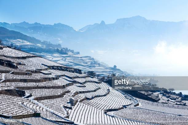 lavaux vineyards at winter sunrise, switzerland - vaud canton stock pictures, royalty-free photos & images