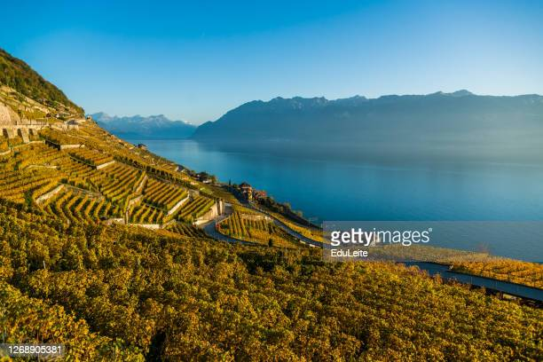 lavaux vineyards - lausanne stock pictures, royalty-free photos & images
