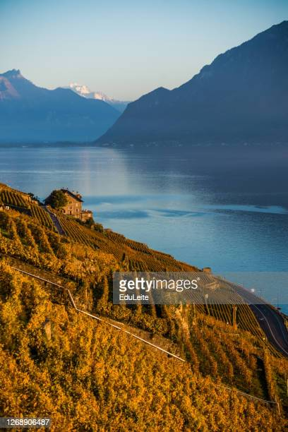 lavaux vineyards - montreux stock pictures, royalty-free photos & images