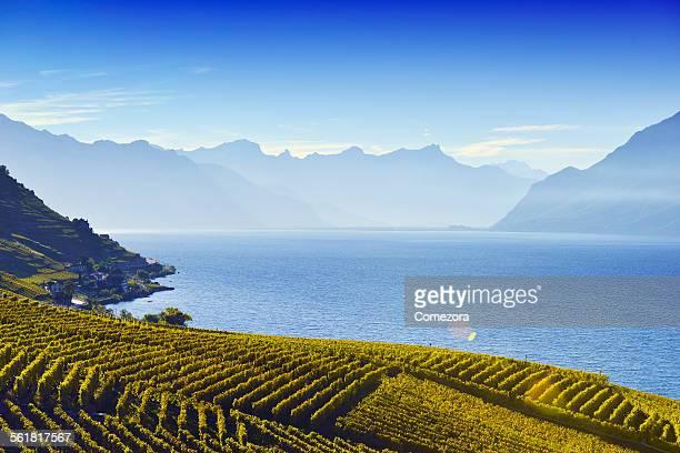 lavaux vineyards - ヴォー州 ストックフォトと画像