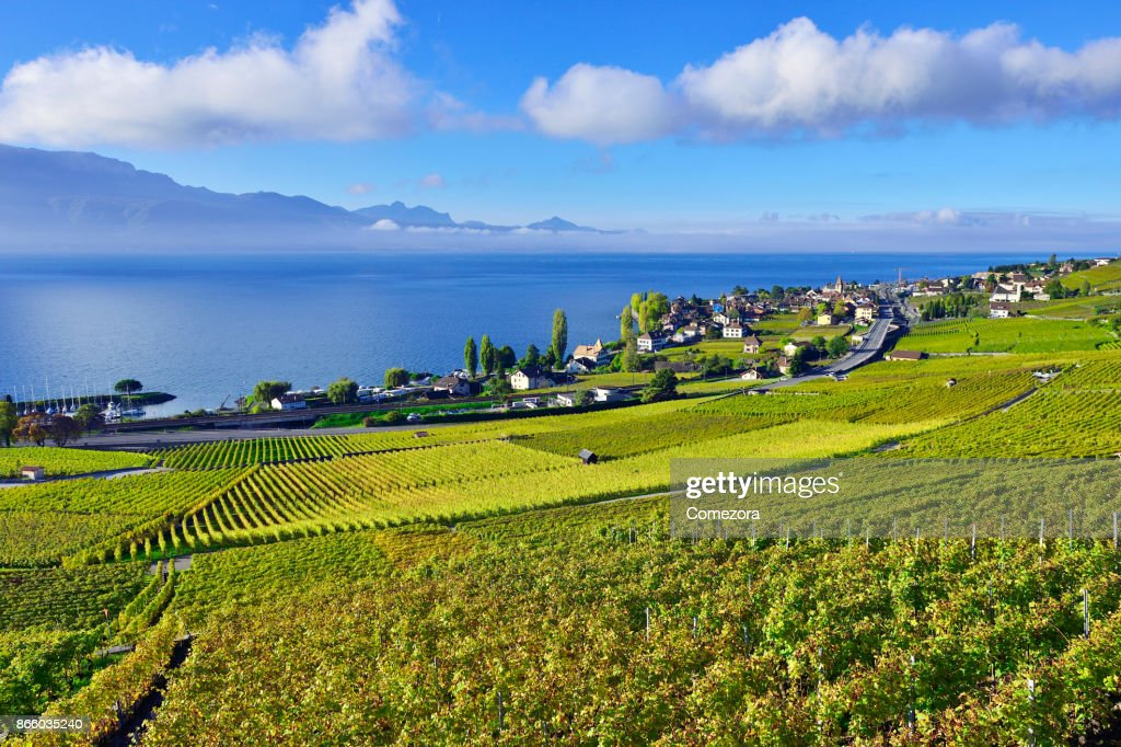 Lavaux Vineyards, Switzerland : Stock Photo