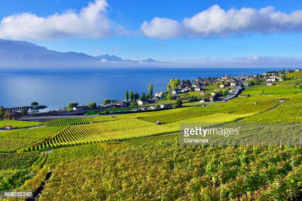 lavaux vineyards, switzerland - kanton waadt stock-fotos und bilder