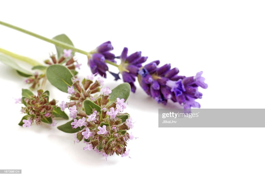 lavender and oregano flower : Stock Photo
