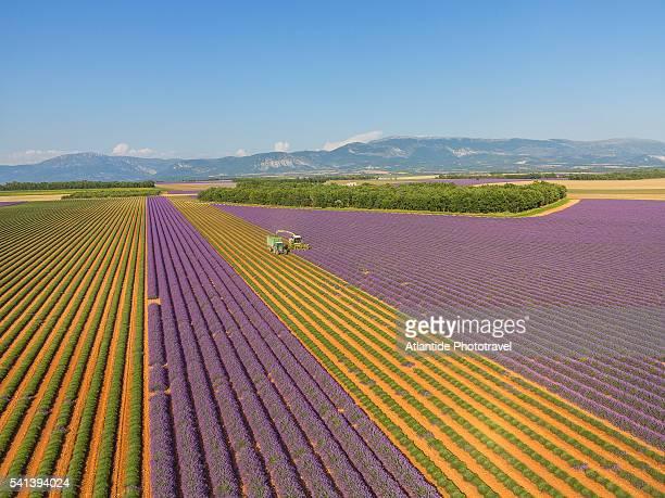 lavender field around valensole - ヴァレンソール高原 ストックフォトと画像