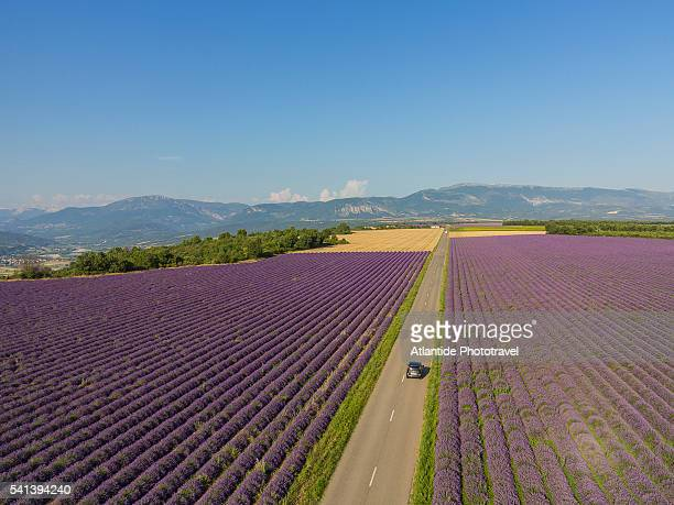 Lavender field around Valensole