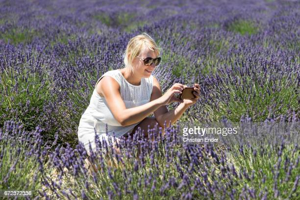 lavender field in provence - plateau de valensole stock photos and pictures