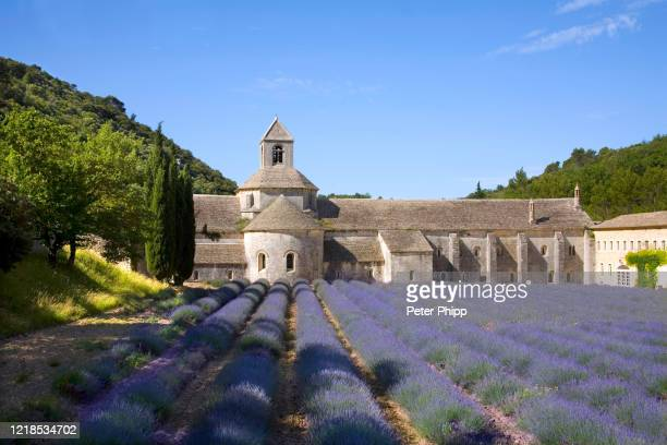 lavender fields at the abbaye de senanque at gordes in provence france - cisterciense - fotografias e filmes do acervo