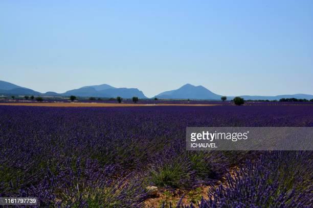 lavender fields france - ヴァレンソール高原 ストックフォトと画像