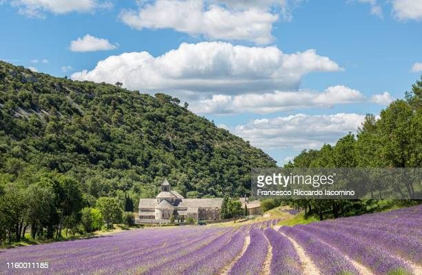 lavender fields in full bloom in late june in front of abbaye de senanque abbey, provence, france - francesco riccardo iacomino france foto e immagini stock