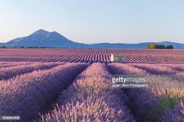 lavender fields on the plateau de valensole, provence. - provence alpes cote d'azur stock pictures, royalty-free photos & images