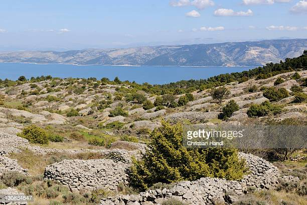 Lavender fields protected with stone walls, Hvar Island, Croatia, Europe
