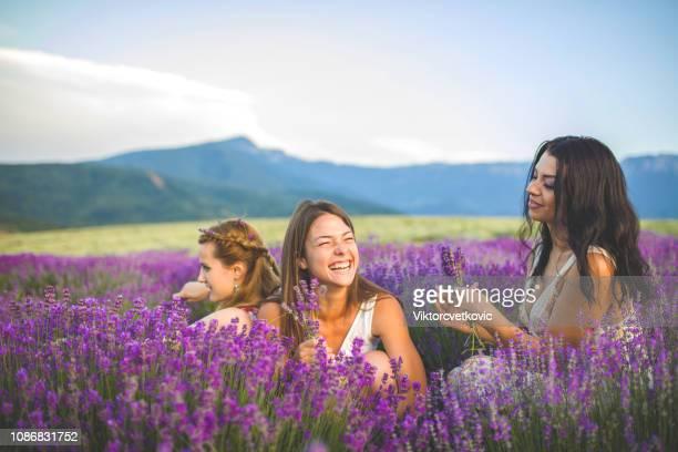 ラベンダーの幸福 - lavender color ストックフォトと画像