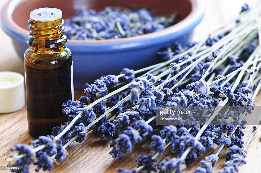 Lavender herb and essential oil : Stock Photo