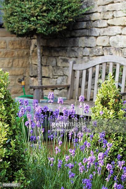 lavender in a courtyard garden. - stone wall stock pictures, royalty-free photos & images