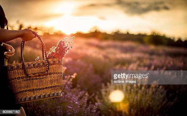 Lavender in basket