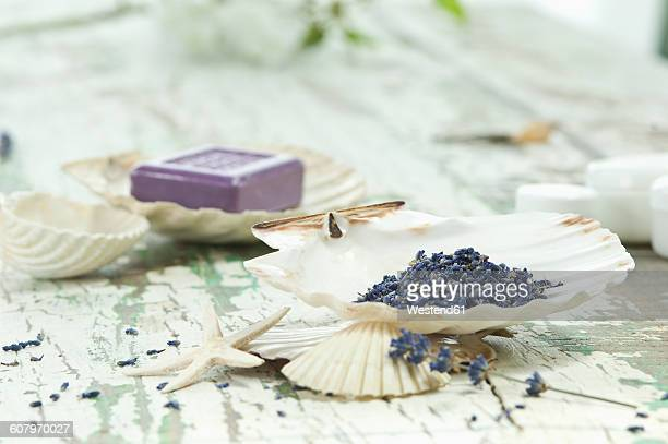 Lavender in sea shell and bar of soap