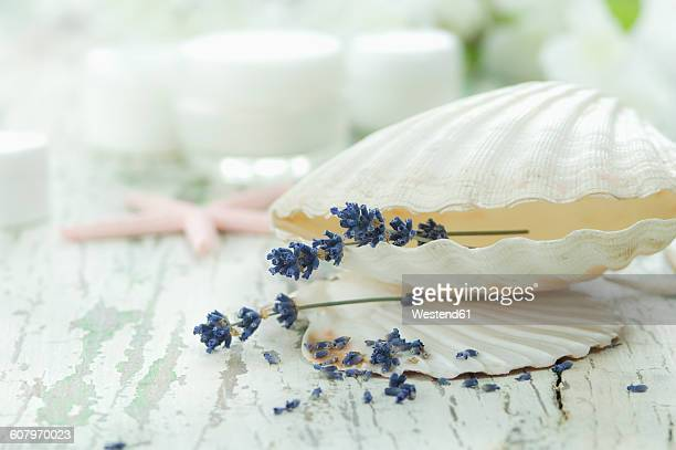 Lavender in sea shell with cream pots in background