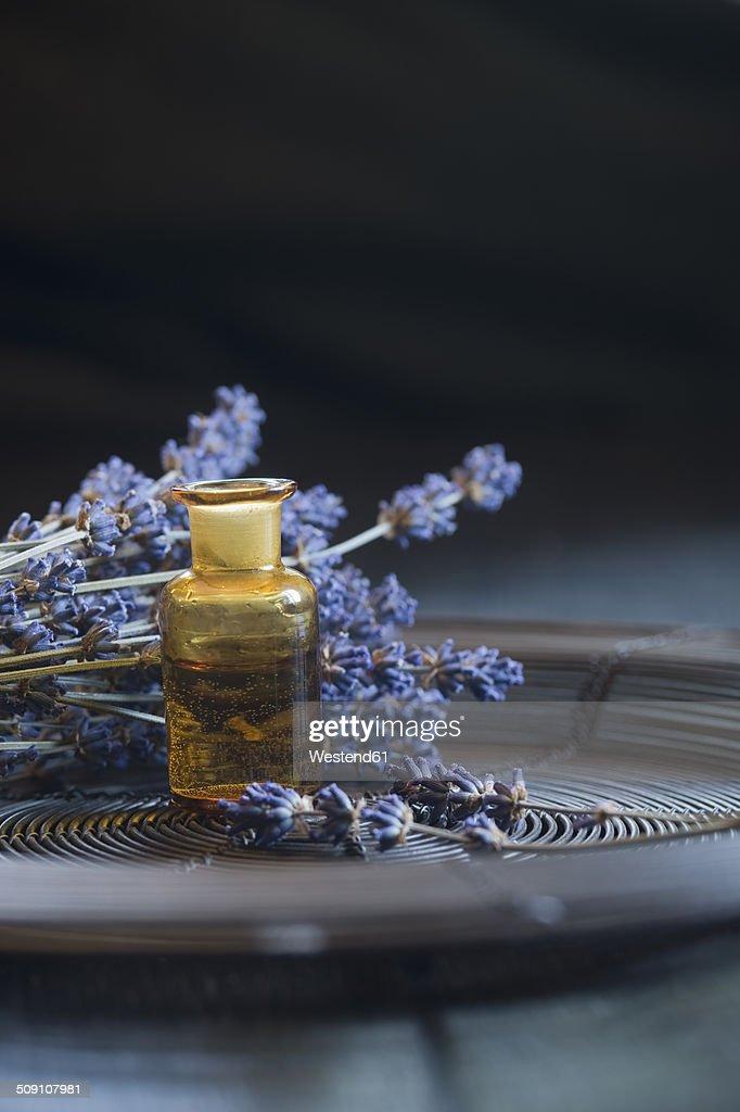 Lavender oil in a glass bottle, twigs of lavender, Lavandula angustifolia : Foto de stock