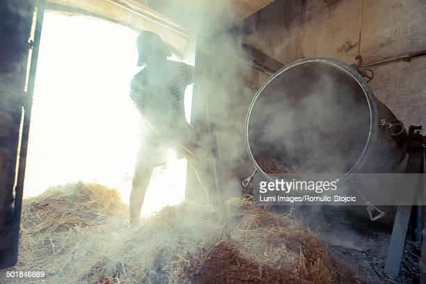 Lavender oil production, drying room, Hvar, Dalmatia, Croatia