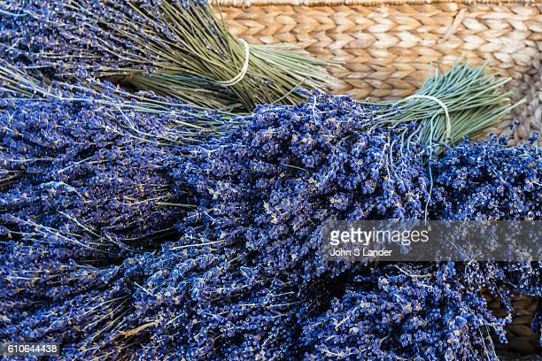 Lavender or lavandula is a flowering plants that is surprisingly found in the mint family. Many types of lavender are cultivated and used as...