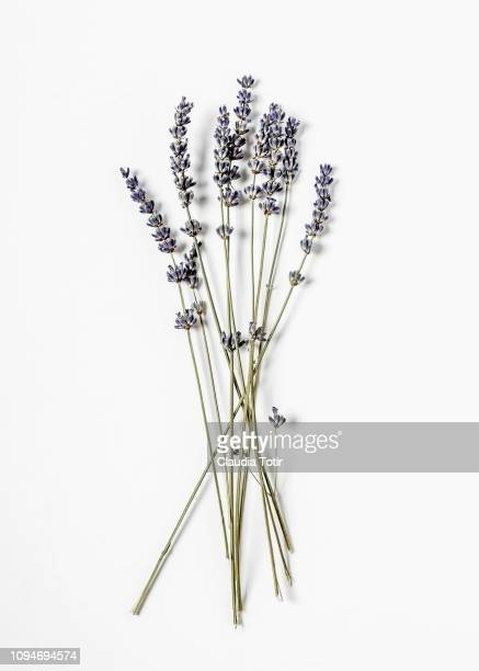 lavender - color lavanda - fotografias e filmes do acervo