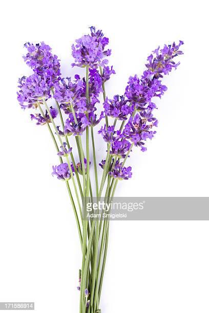 tappo lavanda - mazzo di fiori foto e immagini stock
