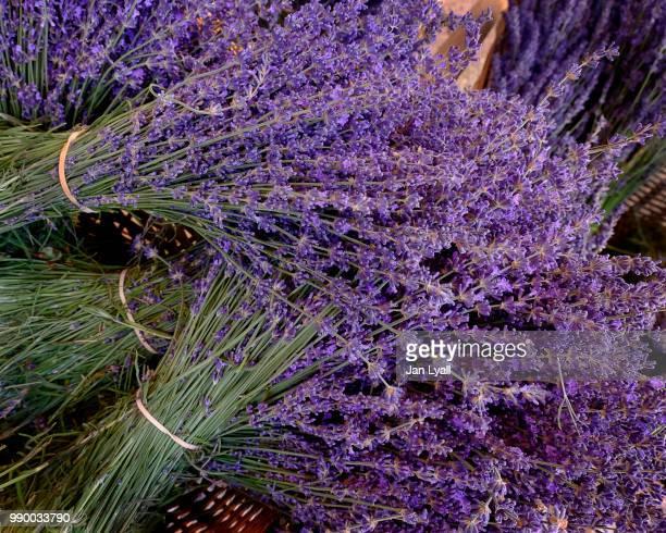 lavender - lavande photos et images de collection