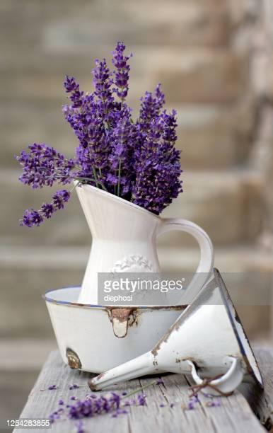 lavanda retrò - lavender color foto e immagini stock