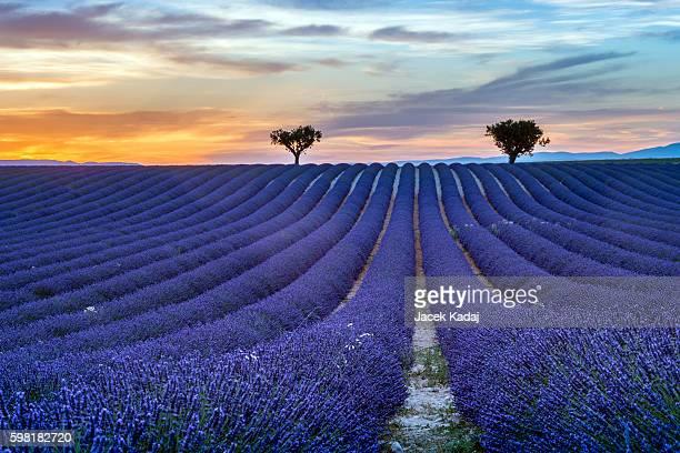 lavender summer sunset landscape - アルプドオートプロバンス県 ストックフォトと画像