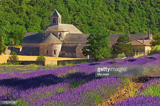 Lavenders fields at Abbaye Notredame de Senanque Gordes Provence France