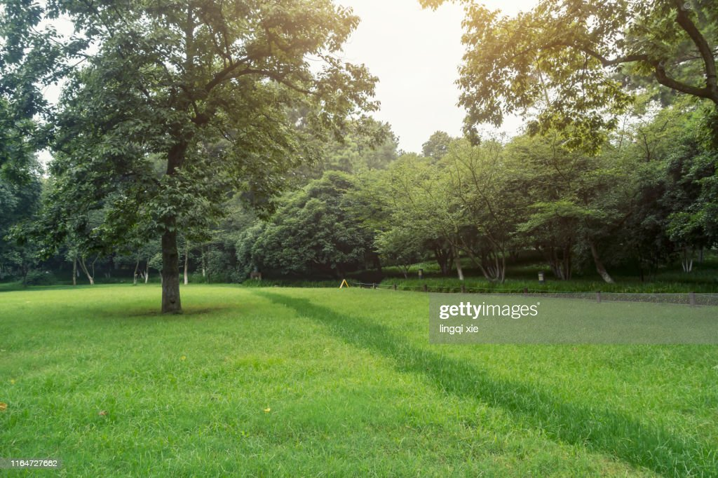 Lawn and trees in the park : ストックフォト