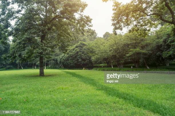 lawn and trees in the park - park stock-fotos und bilder