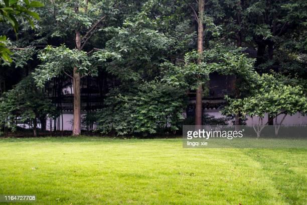 lawn and trees in the park - hierba familia de la hierba fotografías e imágenes de stock